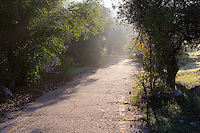 A paved footpath through a scenic grove of olive trees in the Valley of the Cross in Jerusalem.