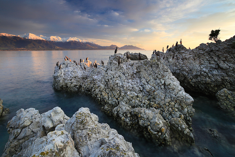 Shags on rocks in Kaikoura Bay, Kaikoura, New Zealand - stock photo, canvas, fine art print