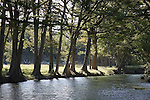 Medina River at Bandera, Texas, with cypress trees.