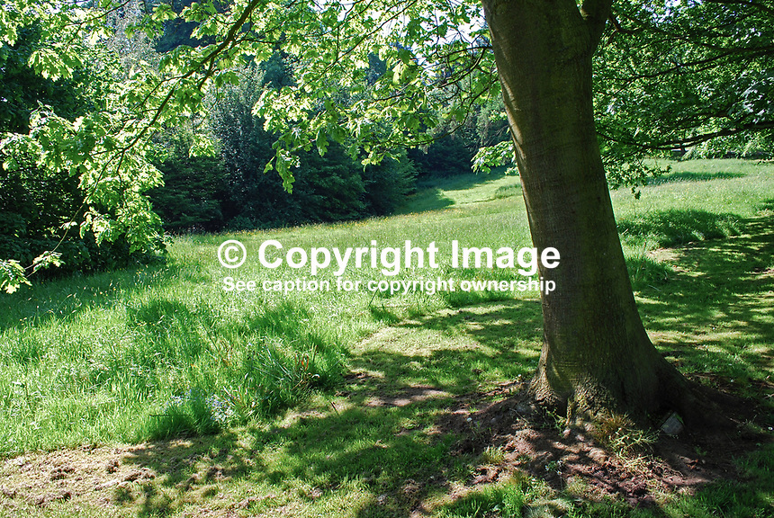 Late spring, early summer, Barnett's Demesne, Malone, Belfast, N Ireland, UK, parkland, trees, foliage, sunshine, shadows, 200905312525..Copyright Image from Victor Patterson, 54 Dorchester Park, Belfast, UK, BT9 6RJ..Tel: +44 28 9066 1296.Mob: +44 7802 353836.Voicemail +44 20 8816 7153.Skype: victorpattersonbelfast.Email: victorpatterson@mac.com.Email: victorpatterson@ireland.com (back-up)..IMPORTANT: If you wish to use this image or any other of my images please go to www.victorpatterson.com and click on the Terms & Conditions. Then contact me by email or phone with the reference number(s) of the image(s) concerned.