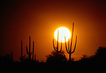 Sundown over Arizona desert.
