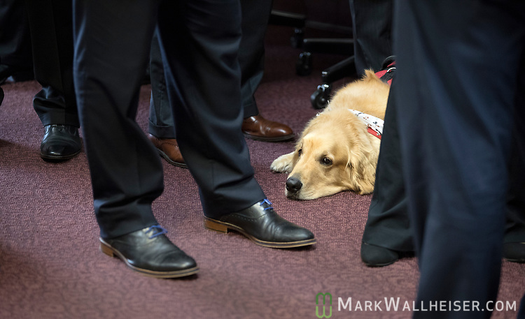 """Former Green Beret Brian Anderson's service dog """"Hero"""" lays among the feet of legislators during a press conference on military-friendly legislation at the Florida Capitol."""