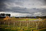 Vineyards behind Etude, in the Carneros region of Napa, Ca., on Saturday, Feb. 6, 2010.