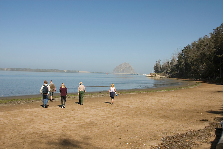 California, San Luis Obispo County: Morro Bay State Park, with Morro Rock, artists painting Morro Rock, rangers leading walks, and a heron rookery..Photo caluis174-70894.Photo copyright Lee Foster, www.fostertravel.com, 510-549-2202, lee@fostertravel.com