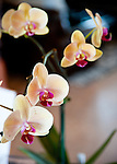 The day we visited, Narmada Winery had a lovely phalaenopsis orchid on the reception table we passed on our way to the tasting bar.