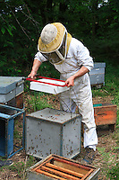 Weighing a swarm.