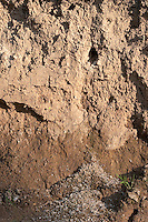 Eisvogel, Eis-Vogel, Eingang zum Nest in einer steilen Lehmwand, Steilwand, Neströhre, Kotreste zeigen an, dass die Höhle besetzt ist, Alcedo atthis, Kingfisher, Martin-pêcheur d´Europe