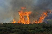 Incendi. Fire.
