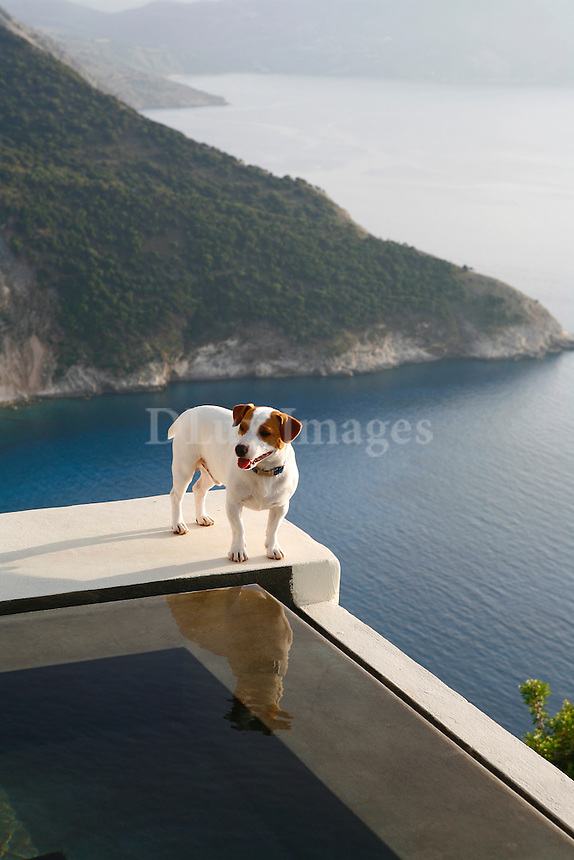 Dog standing on pool ledge overlooking Mediterranean sea in Greece
