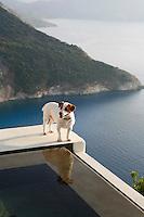 Dog standing on pool ledge overlooking Mediterranean sea in Greece