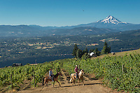 Equestrian wine tours for Sarah