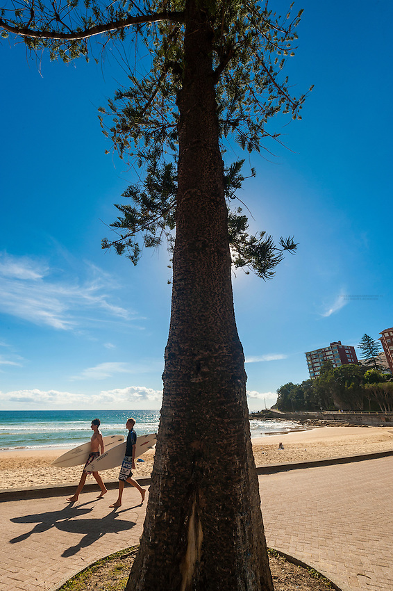 Surfers walking on a path by the beach, with a huge Norfolk Island pine tree in the foreground, Manly Beach, Sydney, New South Wales, Australia