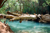 WATERFALLS<br /> Havasu Creek, Fallen Tree<br /> Quiet Pool, Supai Indian Reservation, AZ