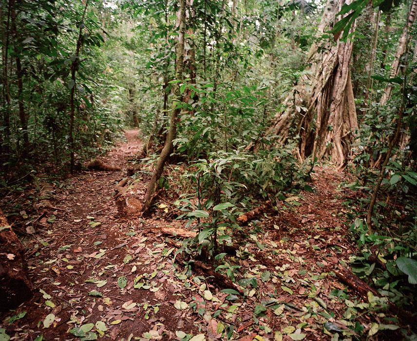 Tambopata Nature Reserve, Amazon region, PERU, South America