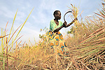 Peresi Nyoka cuts grass to use on the thatched roof of her hut in Yei, Southern Sudan. Ms. Nyoka is a United Methodist. NOTE: In July 2011, Southern Sudan became the independent country of South Sudan