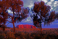Sunset at Ayers Rock, Uluru National Park, framed by Central Australia Desert Oaks