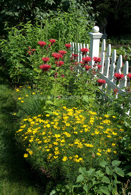 White picket fence garden of red and yellow flowers