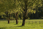 Three trees in a green pasture near Fernan, Idaho
