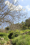 Israel, Einot Gaaton in the Upper Galilee