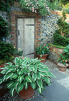 Container of hosta, pots of Calla lilies next to rustic wooden garden door in brick & stone wall, spiral yew shrub evergreens in raised bed, pretty garden scene