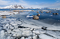 Snow floats in water of small bay, near Stamsund, Vestvågøy, Lofoten Islands, Norway
