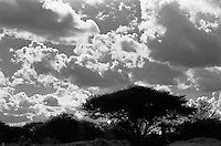 Puffy clouds pass over an acacia tree in Tsavo West National Park, Kenya.