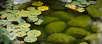 A pond with stones and lily pads near Fredericksburg, Texas, Friday, July 24, 2009. (Darren Abate/pressphotointl.com)