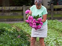 flower farmer Lisa Ziegler havesting peonies at Gardeners Workshop