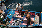 Fishermen and their catch, Mogan, Gran Canaria, Spain,canary islands,fishing industry