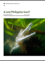 Philippine crocodile story in Asian Geographic.