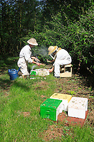 A queen-breeding apiary.