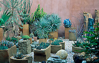 A collection of cacti and succulents planted in containers by Dina Prinsloo