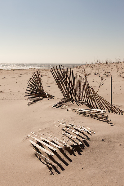 February 27, 2013. Cape May, New Jersey. Fallen sand fences, which are supposed to trap sand and help rebuild beaches and dunes, which in turn can reduce damage from hurricanes.. Tracing the path of Hurricane Sandy, which wrecked havoc on the northeastern seaboard from October 25-31, 2012. The storm caused flooding and caused an estimated 60 billion dollars worth of damage to affected areas.