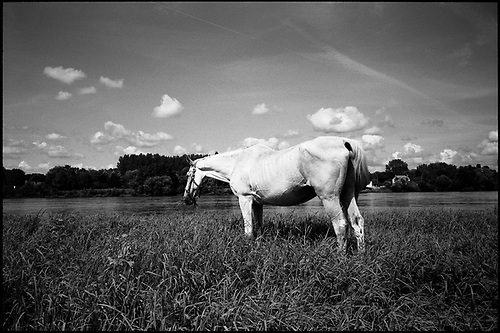 White Horse, Candes Saint Martin, Loire, Valley, France by Paul Cooklin