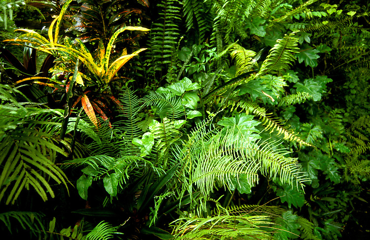 Jamaica: Fern Gully National Park near Ocho Rios. photo: jamaic101 .Photo copyright Lee Foster, www.fostertravel.com, 510/549-2202, lee@fostertravel.com