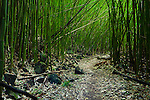 A Bamboo Stand along the Hiking Trail Ohe'o Gulch on Maui, HI