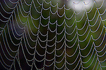 Dew drops covered spiderweb. Dew covered spiderwebs are a geometric beauty.  ©2013. Jim Bryant Photo. ALL RIGHTS RESERVED.