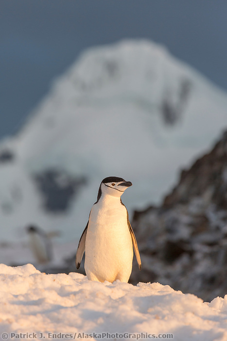 Booth Island, Antarctic peninsula