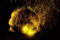 Thurston Lava Tube or Nahuku in Hawaiian, Hawaii Volcanoes National Park, Kilauea Big Island, Hawaii