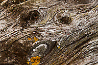Knots and deeply creased bark paint a picture of a face on a tree trunk in San Leadro Marina Park.