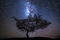 Africa has very little light pollution, and because of this, the night sky is insanely beautiful. But photographing here at night isn&rsquo;t straight forward, as standing out in the middle of the bush in the dark by yourself with a camera isn&rsquo;t really advisable&hellip;thankfully for me, I have a 4WD vehicle and a couple of Masai Warriors escorting me. These guys are armed and know the bush and the behaviour of the animals better than anyone, so I do feel quite safe out there at night. In the afternoons we usually get a storm, but then it clears up perfectly in the evening and the sky comes alive with millions of shining stars, so we head out into the darkness amongst the wild animals to see what we can find to photograph.<br /> <br /> This image is from my first night out photographing. We found this beautiful tree not far from the Mara Bushtops Camp, and when I first took a shot of it against the night sky, the silhouette looks very much like a mouse, so we called it Milky Mouse!