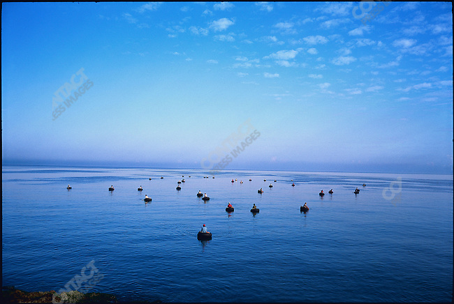 Fishermen float on inner tubes at dawn. Havana Bay, Cuba, March 1994