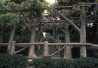 Wisteria in May bloom on gorgeous arbor made of large tree trunks, with steps stairs. The Huntington, San Marino, CA