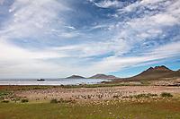 Gentoo penguin colony, Steeple Jason Island, Falkland Islands