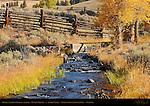 Bridge over Rose Creek, Cottonwoods in Autumn, Lamar Buffalo Ranch, Lamar Valley, Yellowstone National Park, Wyoming