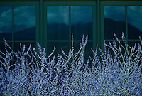 flowers outside a window