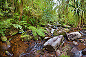 River running through montane rainforest. Andasibe-Mantadia NP, Eastern Madagascar.
