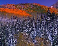 Aspens and spruce-fir forest Wasatch-Cache National Forest, Utah Big Cottonwood Canyon Wasatch Mountains Twin Peaks Wilderness 45 H IC