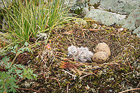 &quot;New Life: Gull Chick&quot;<br />