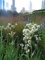 The Lurie Garden